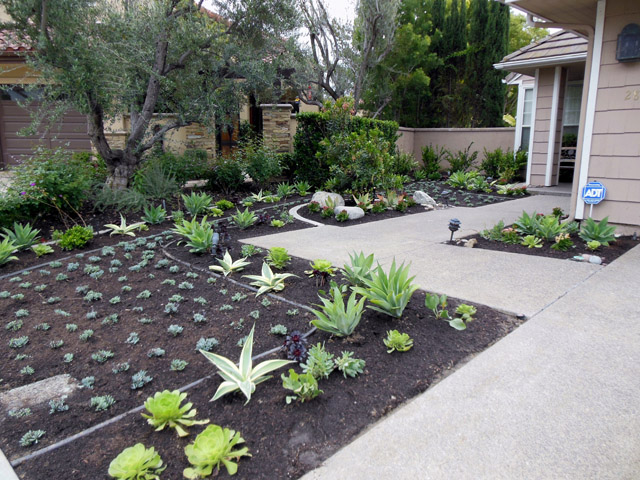 Silver Creek Landscaping creating another water saving yard